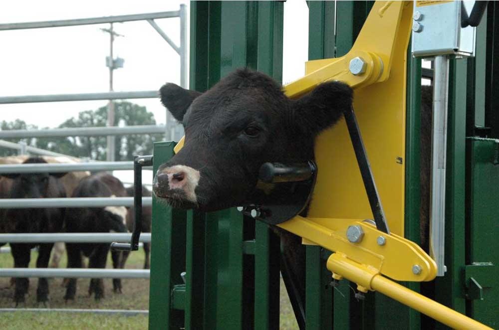 Jones Farm Supplies Cattle And Bison Handling Equipment